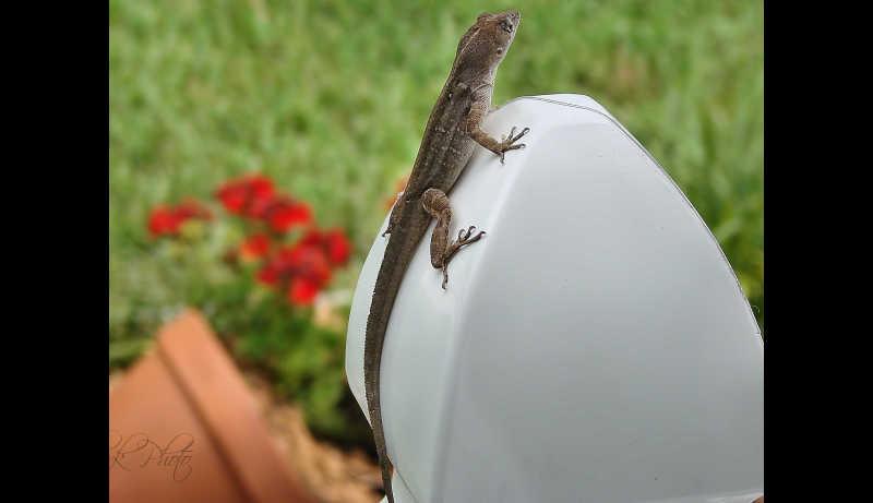 Welcoming gecko...
