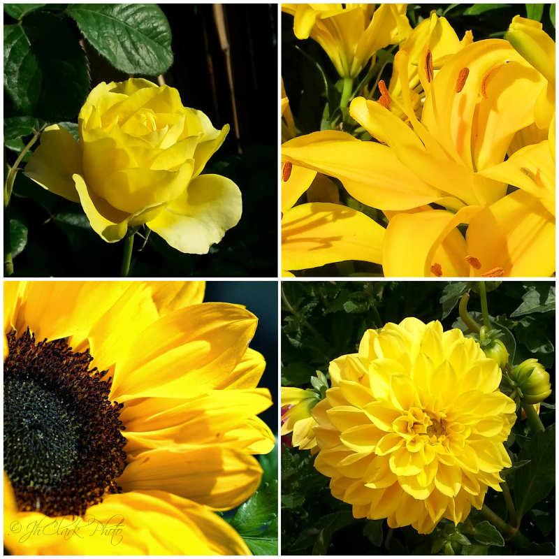October yellows...