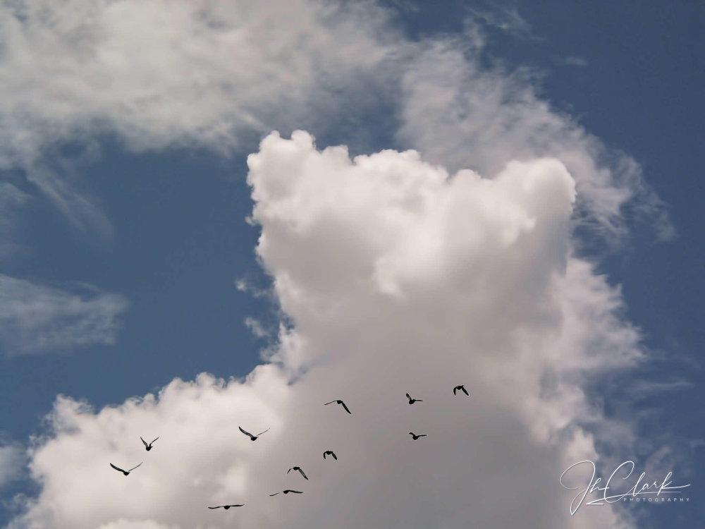 0800 cloud teddy