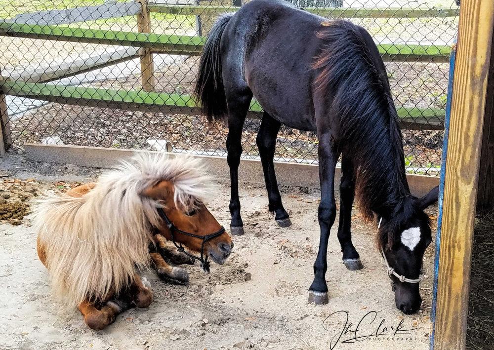 Horse & pony show...