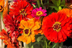 Autumnal colors...