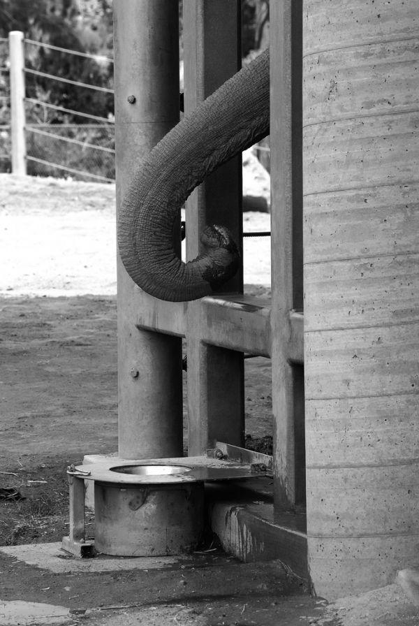 Elephant in Jail
