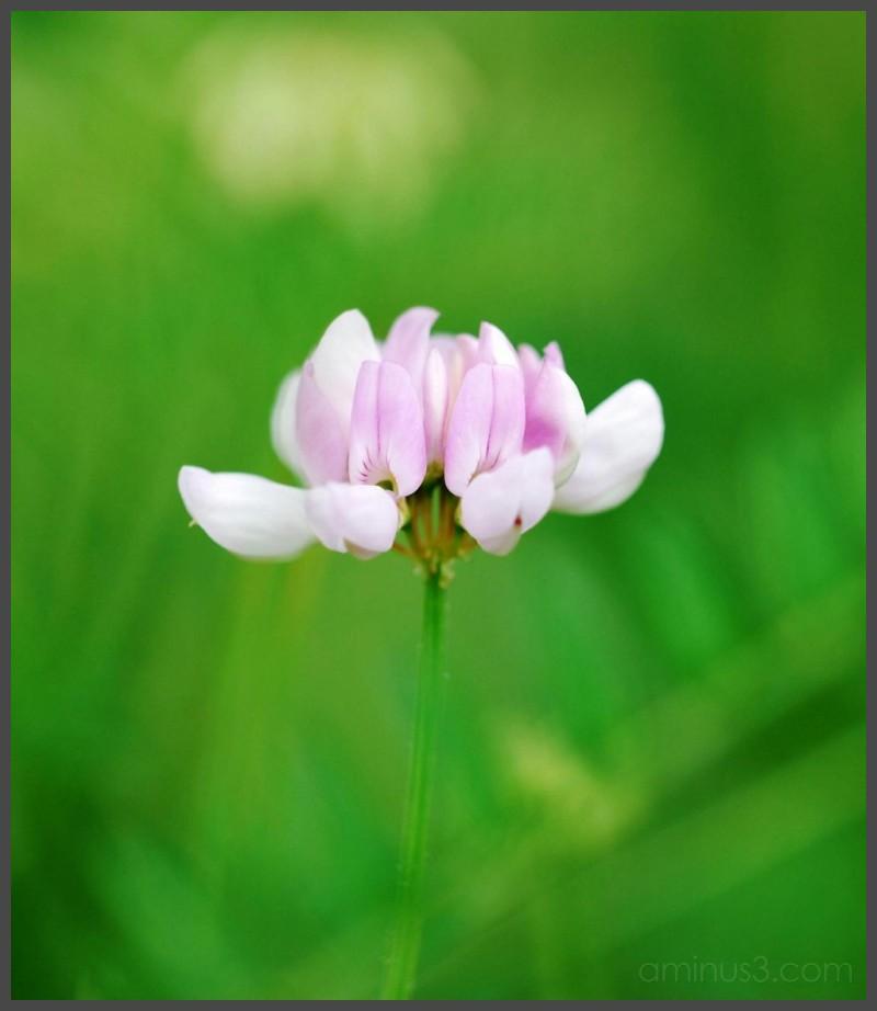 Virginia Tech Duck Pond - Purple Flower