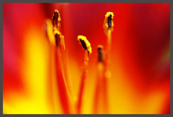 Virginia Tech Duck Pond - Red Flower