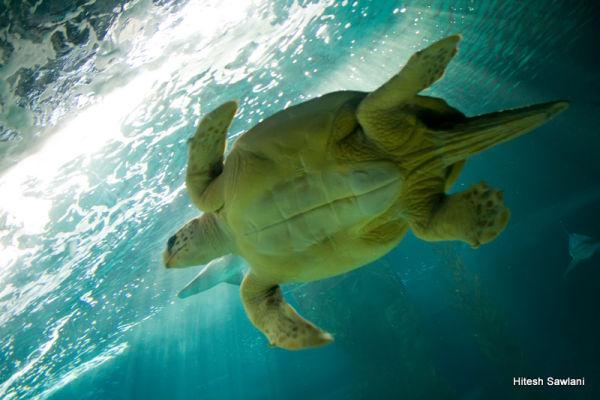 A turtle in the Zoo-Aquarium
