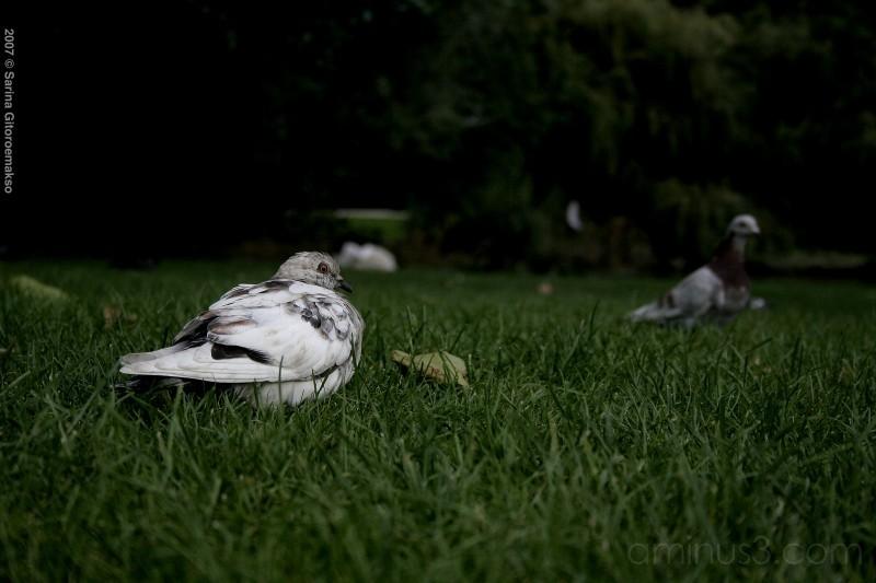 Park Bird