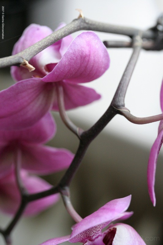 marian's orchids