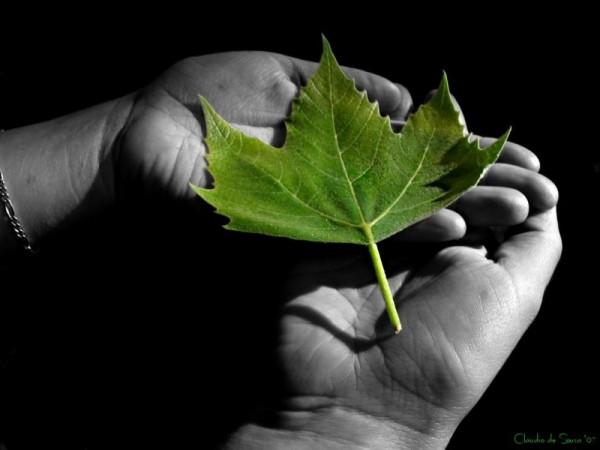 duotone foto leaf