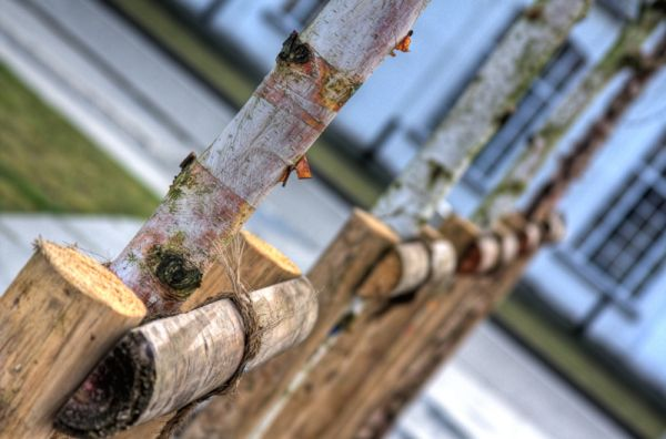 parallel tree stems