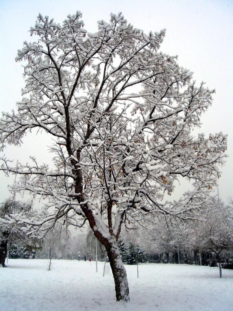 Snow (2 of 4)