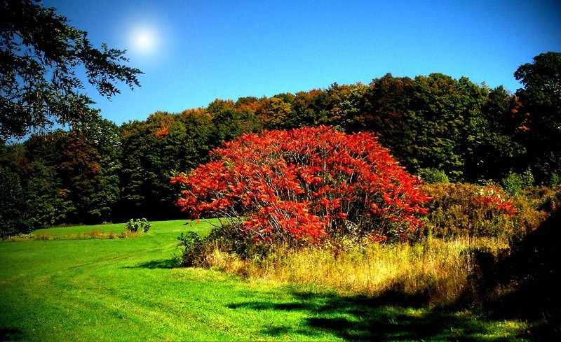 couleur d'automne
