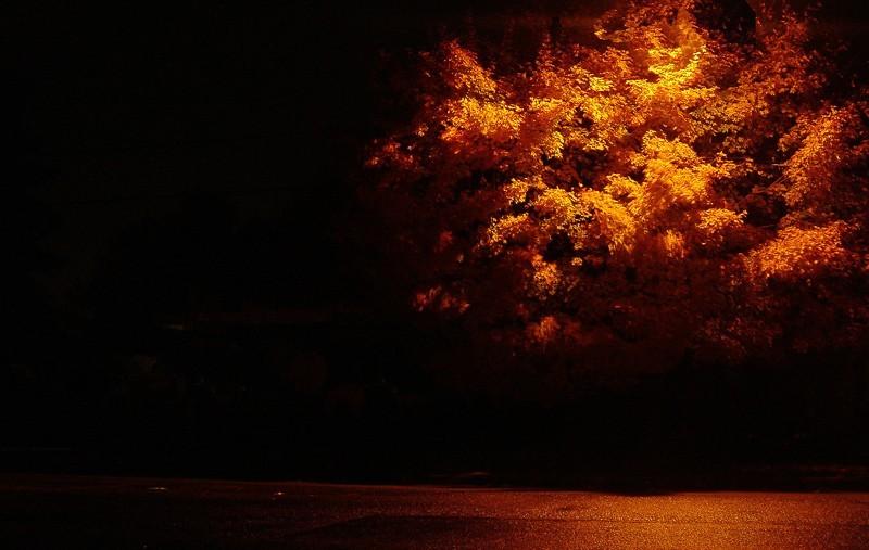 flambée d,automne