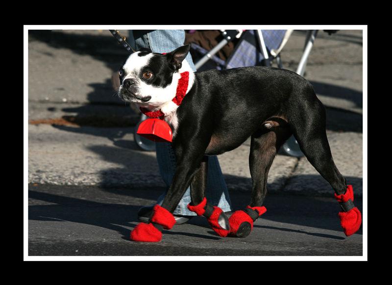 un Noël canin II