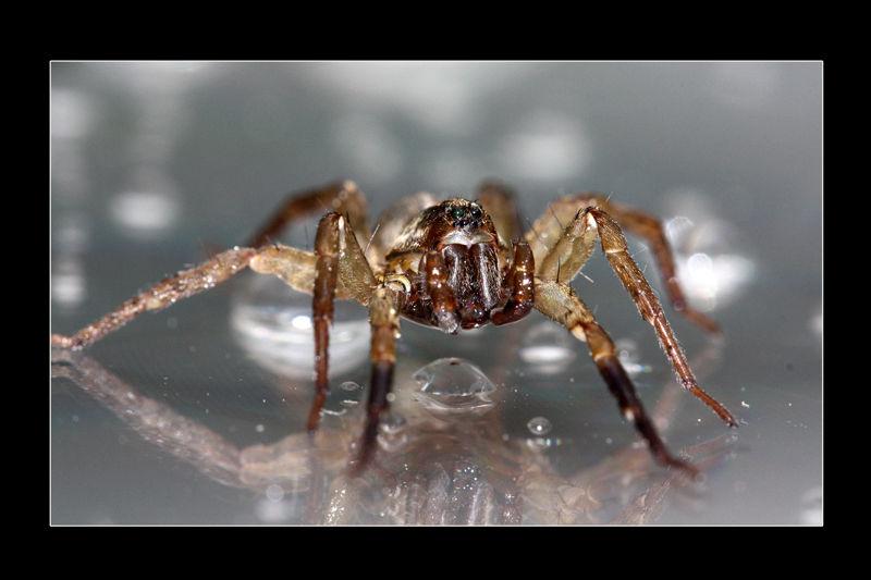 Arachnide II