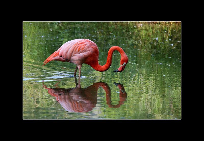 Miroir Miroir ...