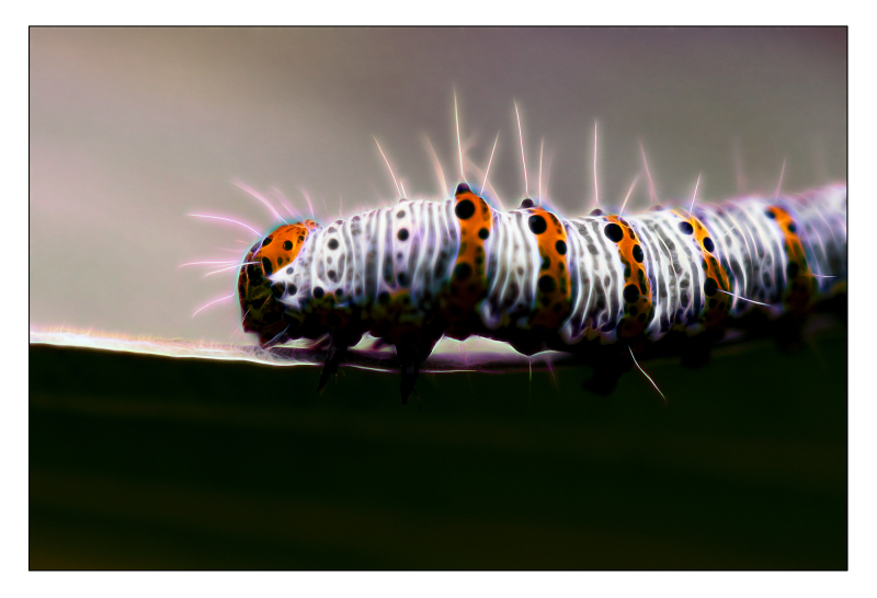 Electric caterpillar