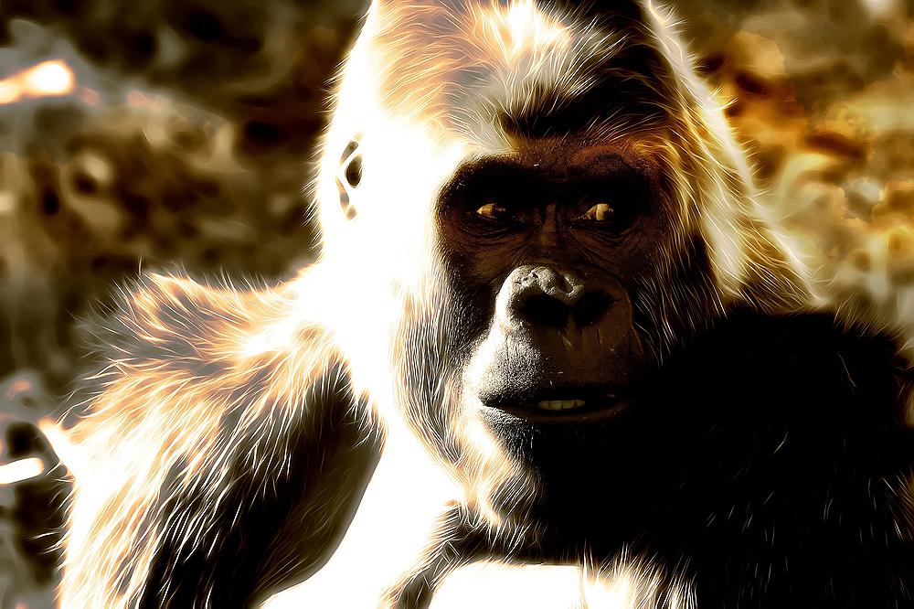 Gorille