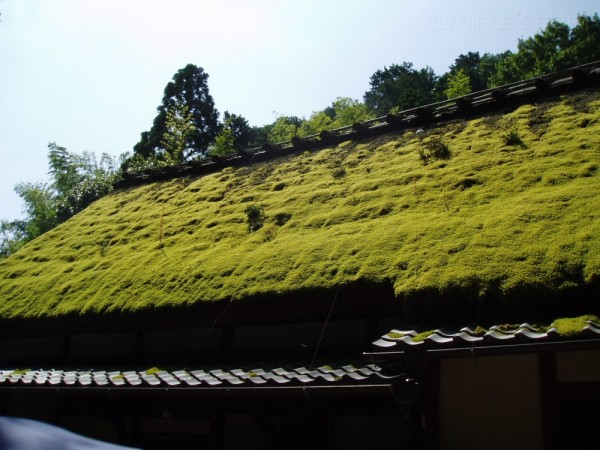 Thatched roof village