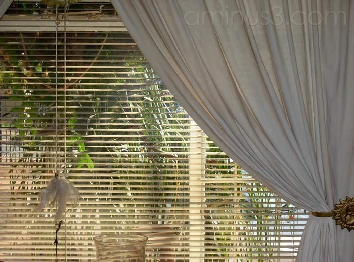 Window with venetian blinds & tie-back curtains