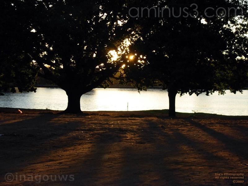 Sunset tree shadows