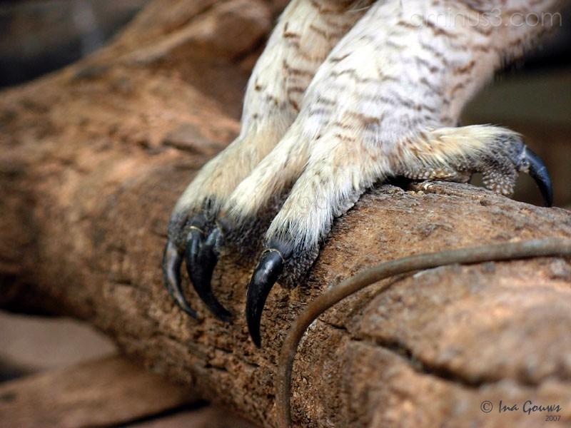 Closeup of owl's feet