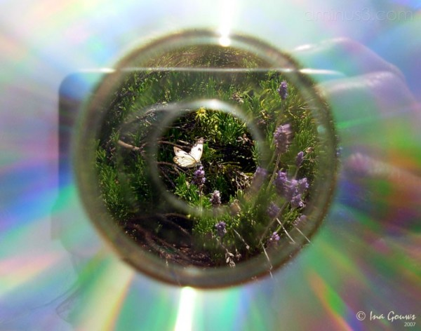 White butterfly photographed through cd hole