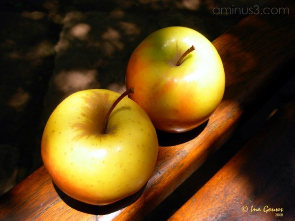 Two apples in the sun