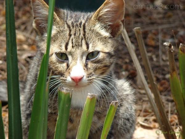 Closeup of striped cat