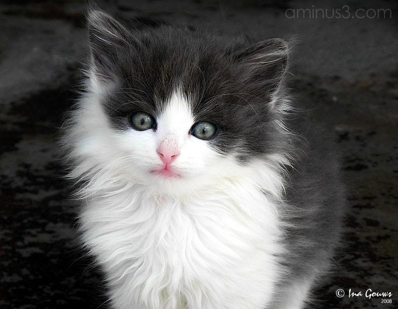 Closeup of black and white kitten