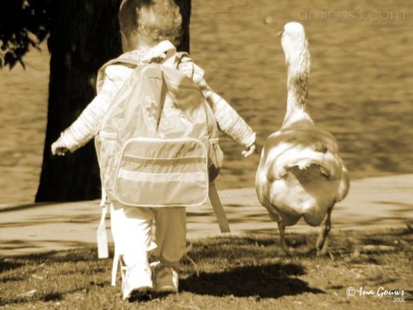 Young child walking with a goose