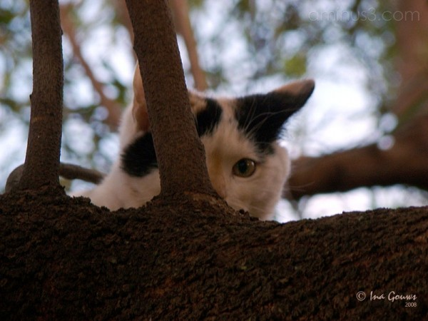 Kitten hiding in tree