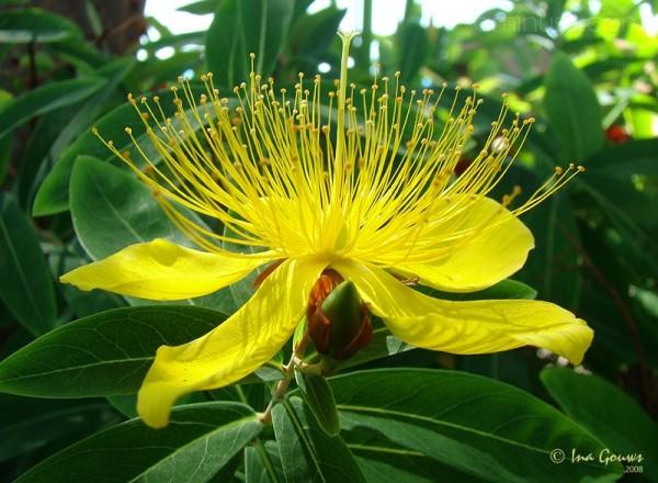 Closeup of yellow wild flower