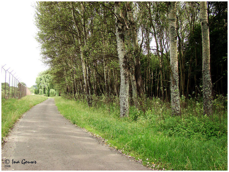 Forest, dirt road and fence