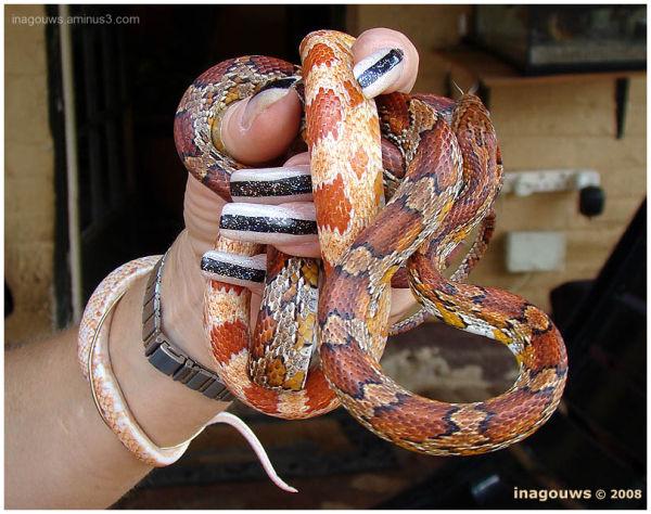 Snakes and long nails