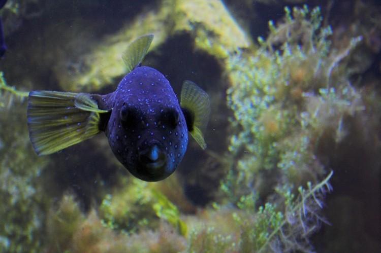 Aquarium 02, Luisenpark Mannheim