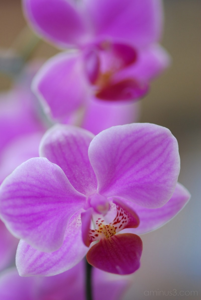 Orchid Series #2