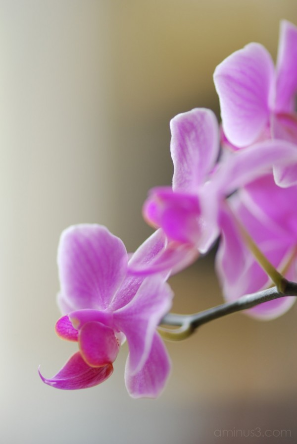 Orchid Series #3