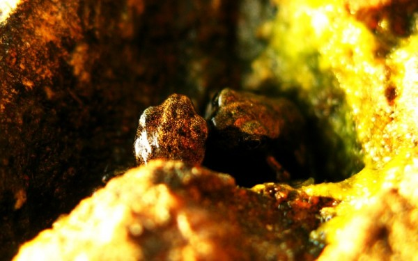 A Frogs Kiss