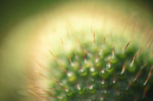 50by58macro - random plant