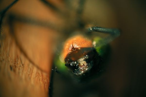50by58macro - Within the Dragonfly mouth