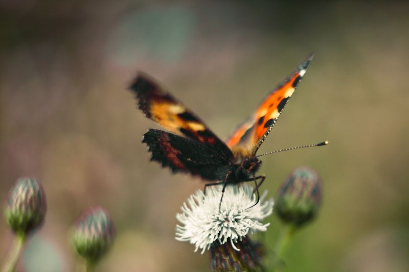 butterfly finding nectar