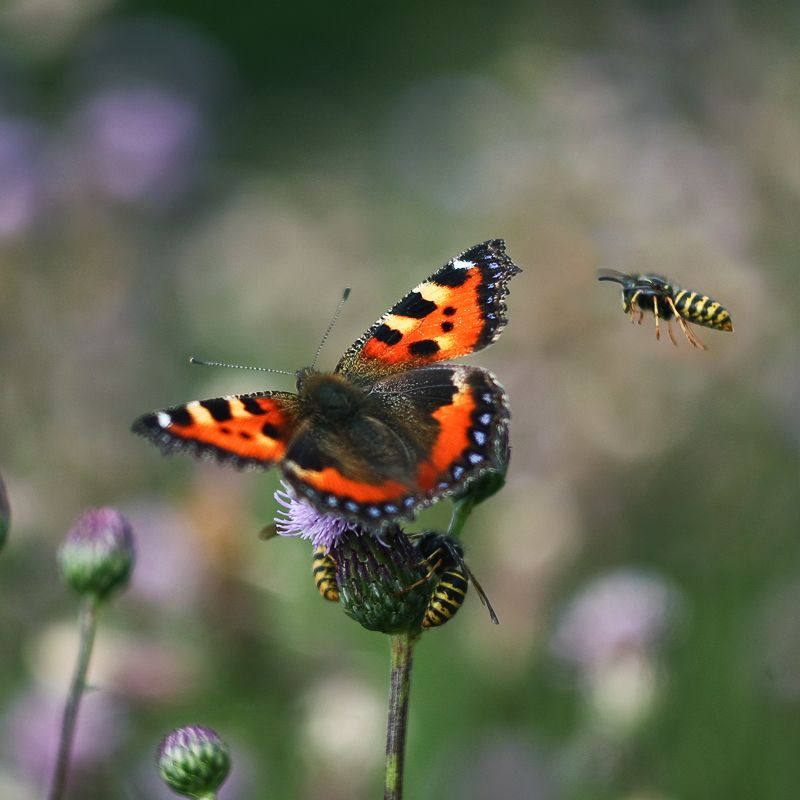 three wasps and a butterfly