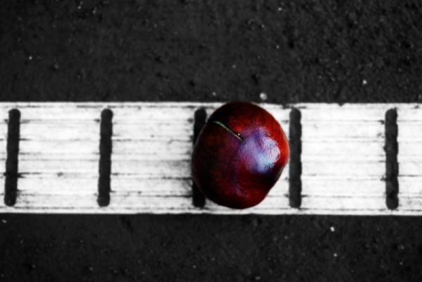 Chestnut on tennis court