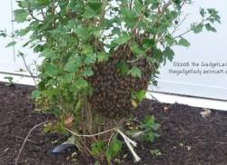 Bees Again