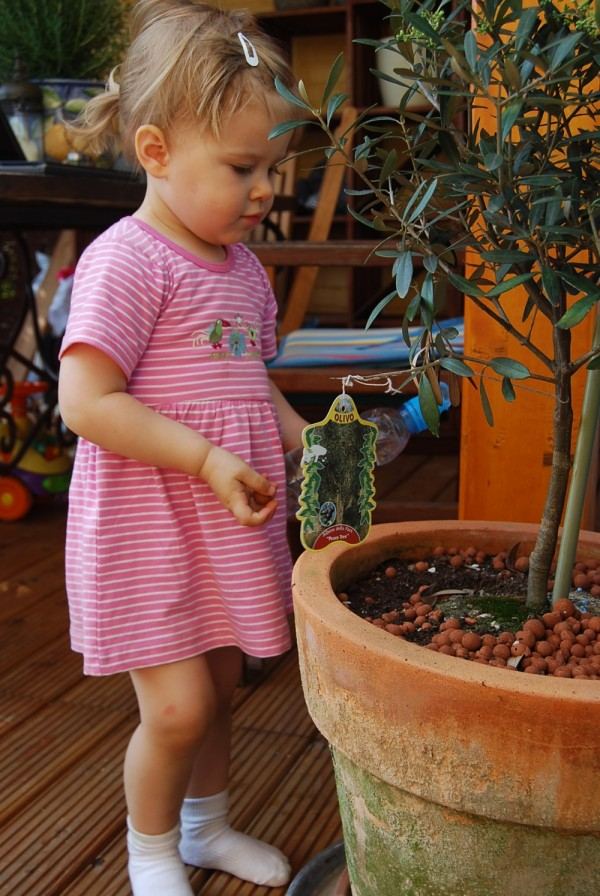 Da sind Oliven dran!