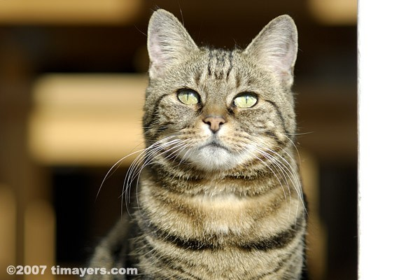 Pet cat