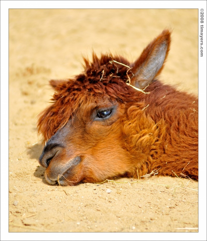 Yoga for Llama's