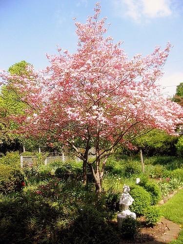 nana's blossoms