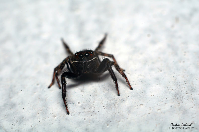 Caught on our wall outside. Macro shot