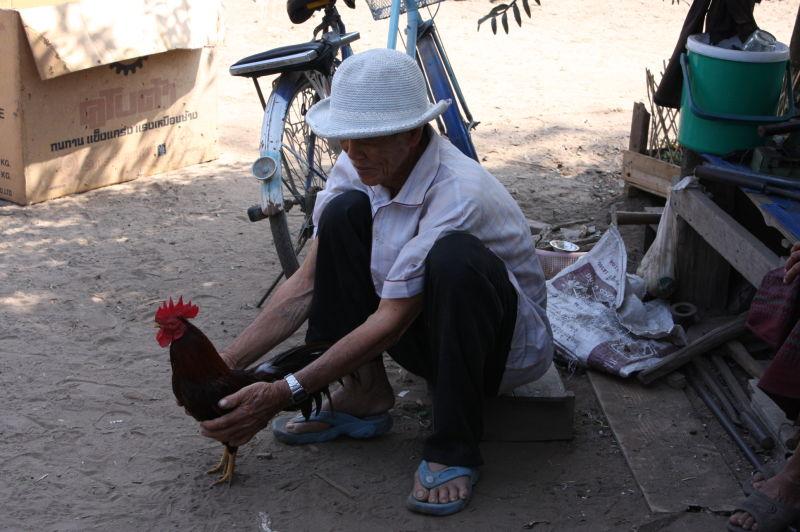 Thailand Native Chicken